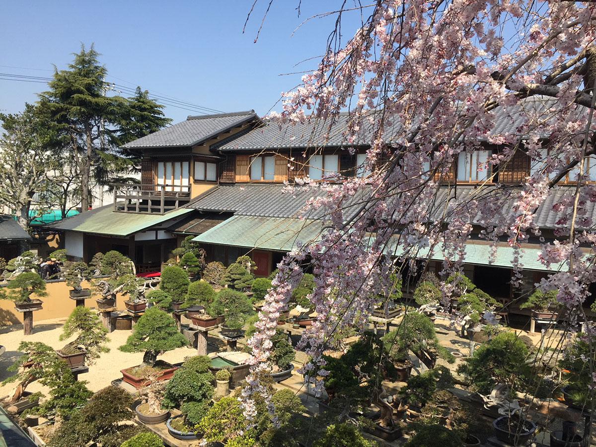 Shunkaen Bonsai Museum_3