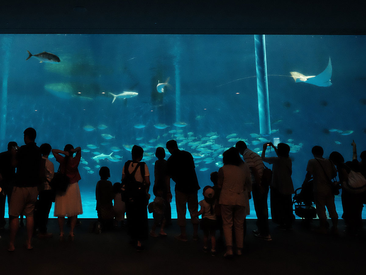 "Kagoshima City Aquarium ""Io-world""_2"