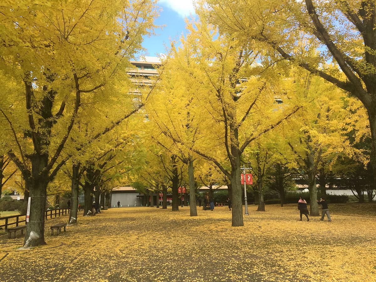 Kumamoto Prefectural Office Promenade_4
