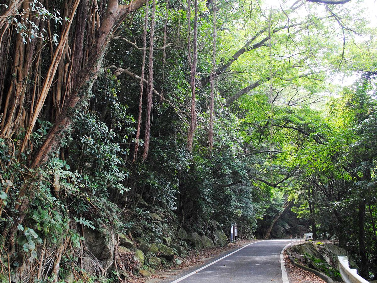 Seibu Rindo Forest Path_4