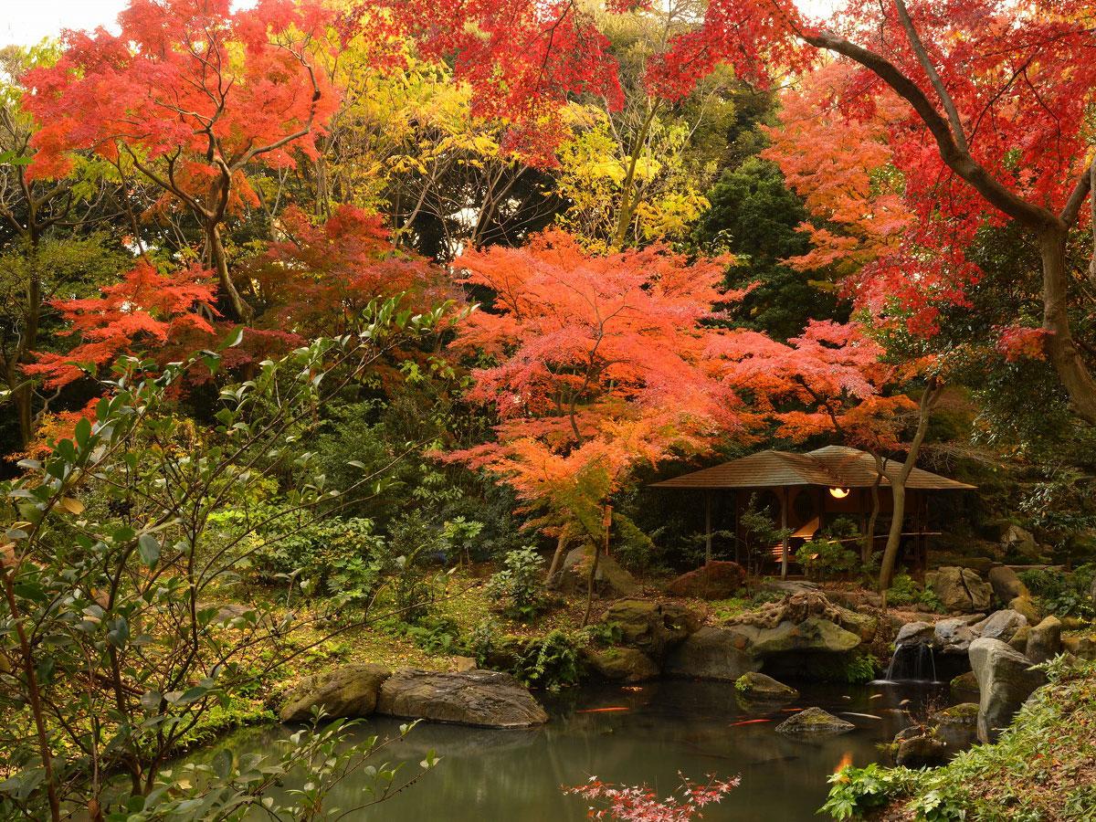 Jardín Rikugien_4