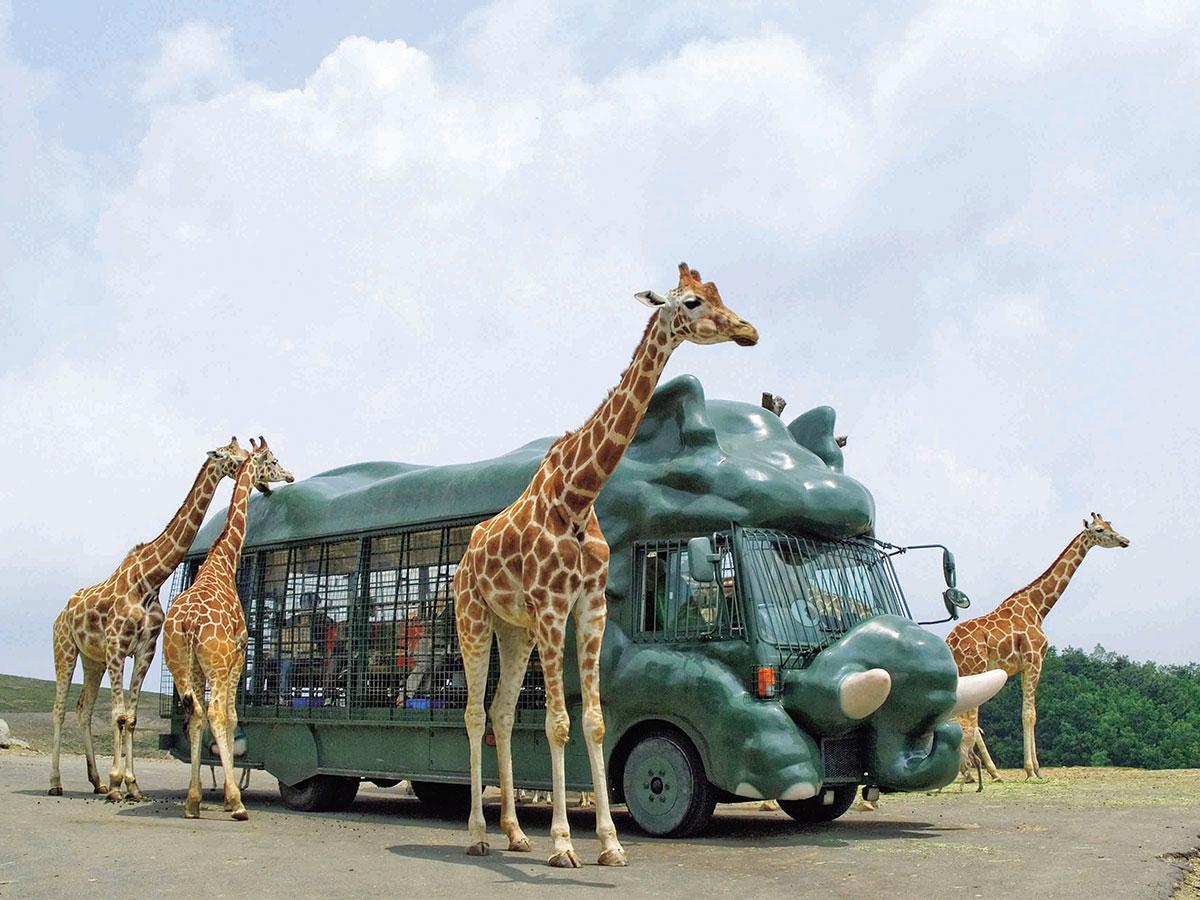 Safari africano