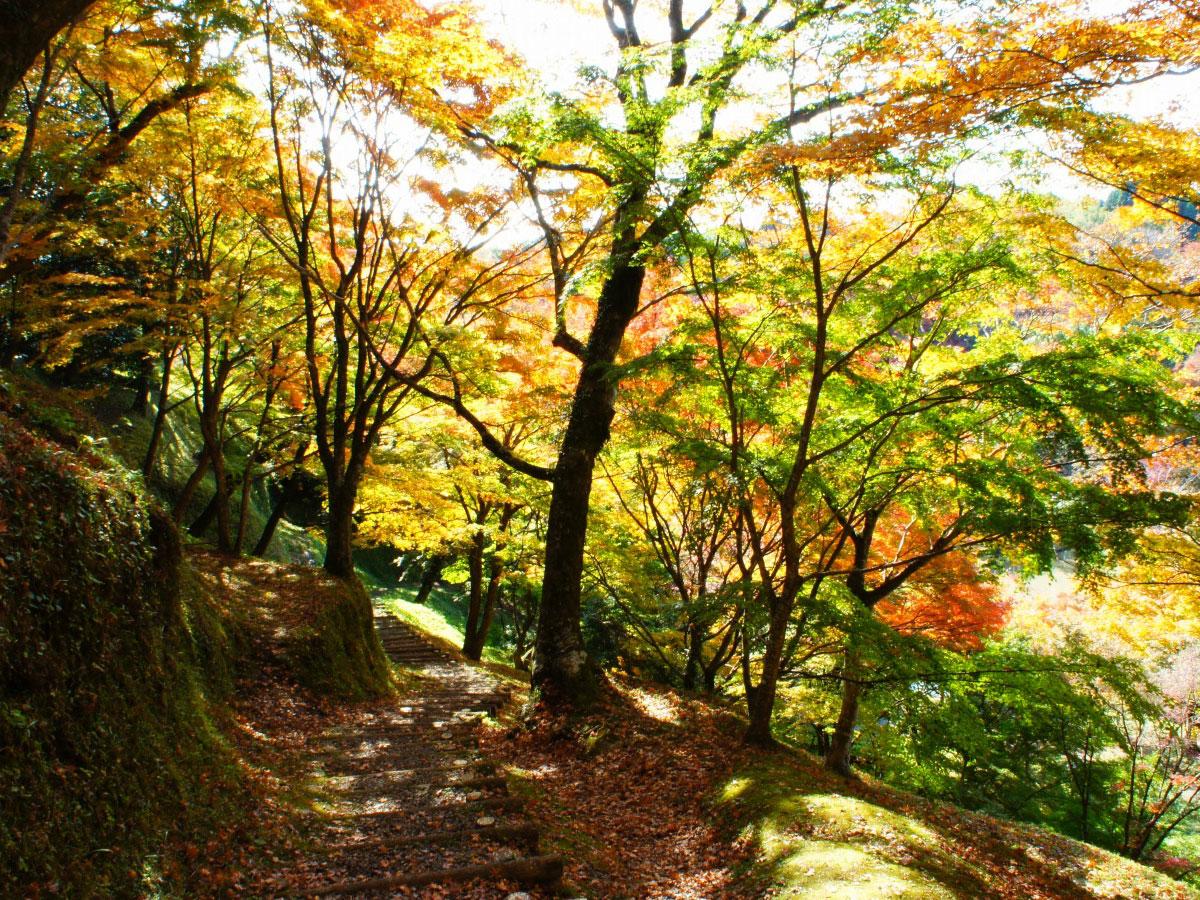 Kyushu OLLE (percorso Okubungo)