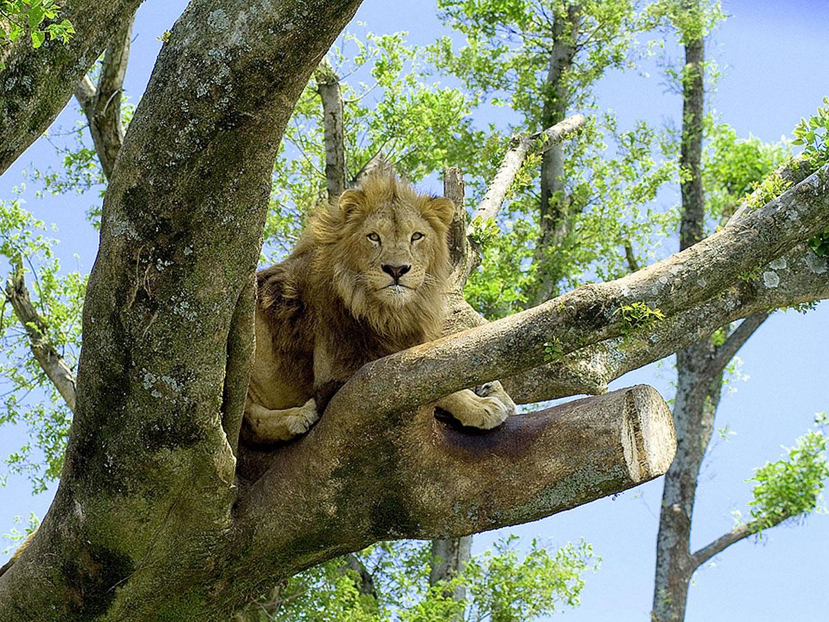 Safari de África_2