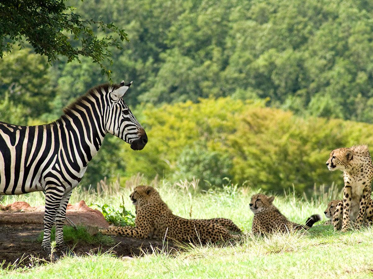 Safari de África_3