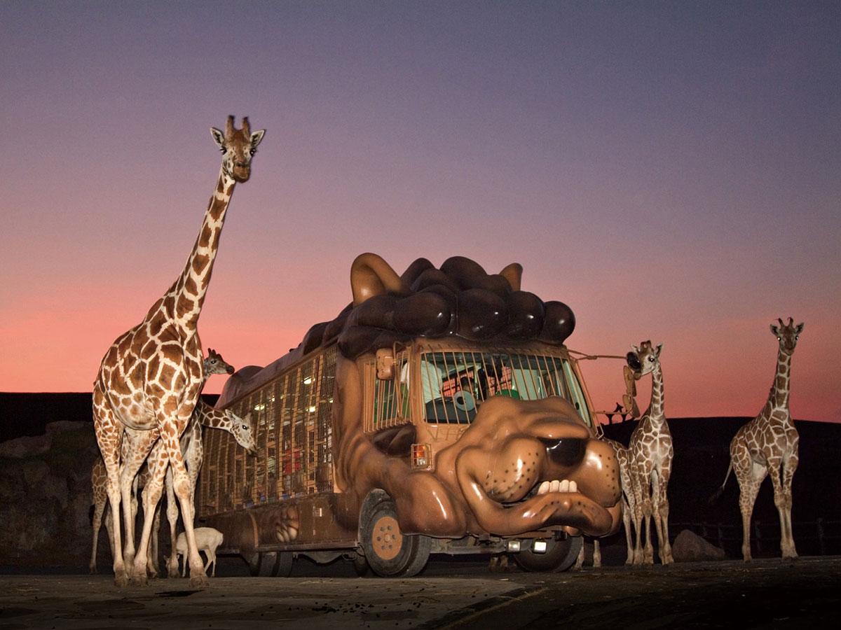 Safari de África_4