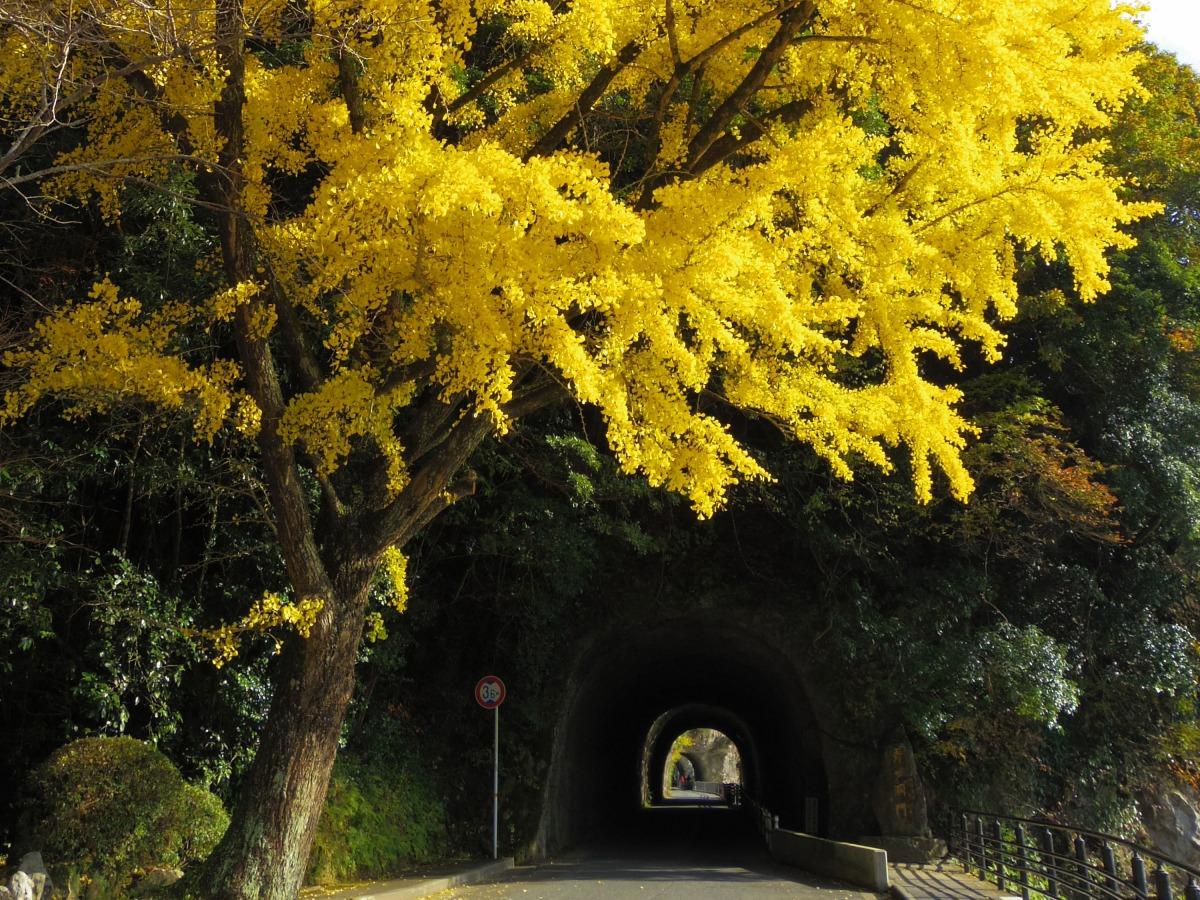 Ao-no-domon Tunnel_1
