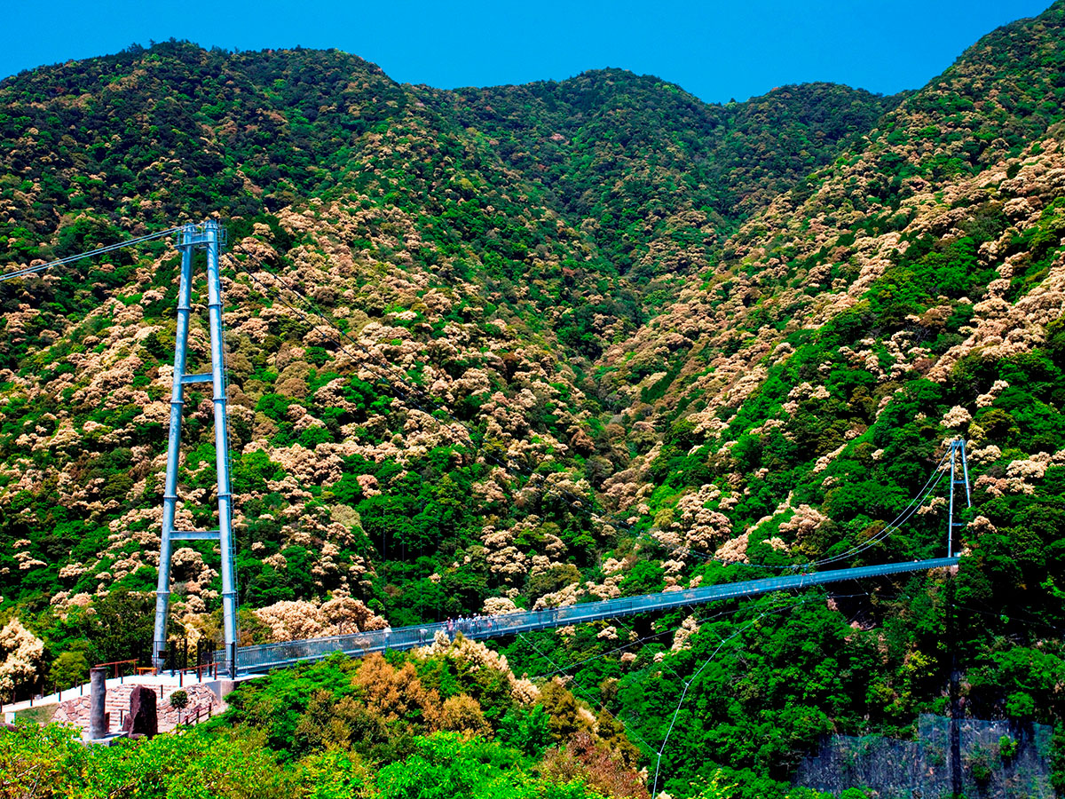 Aya Teruha Suspension Bridge _4