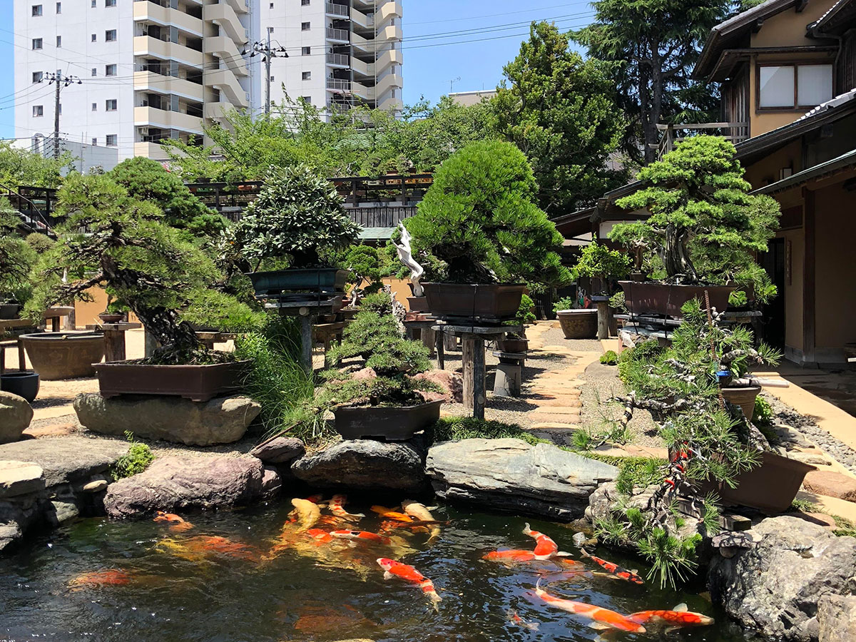 Shunkaen Bonsai Museum_1
