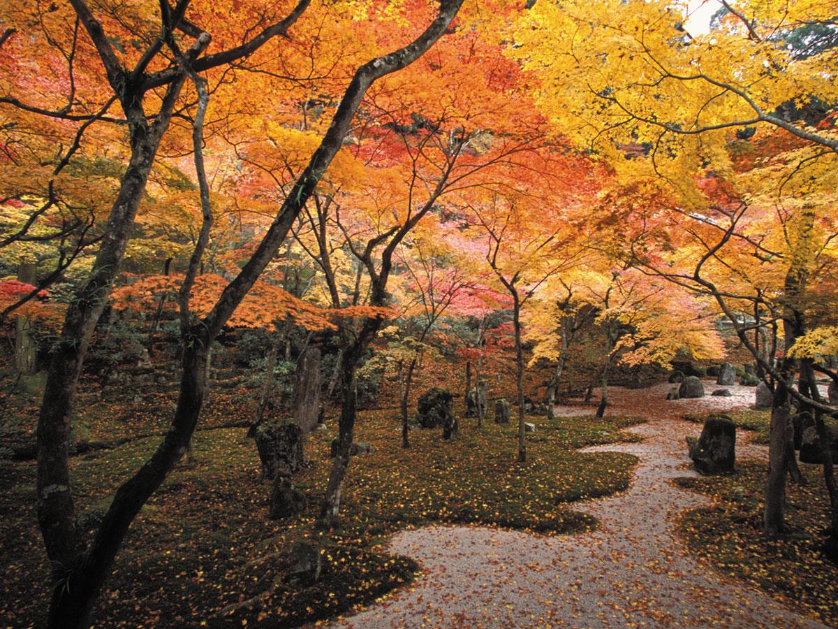 Komyozenji Temple _3