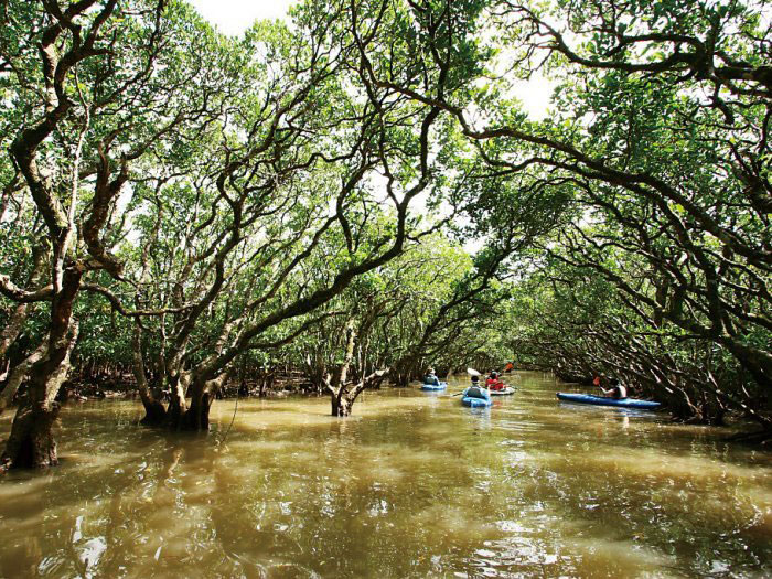 Forest in Black Current Mangrove Park_1
