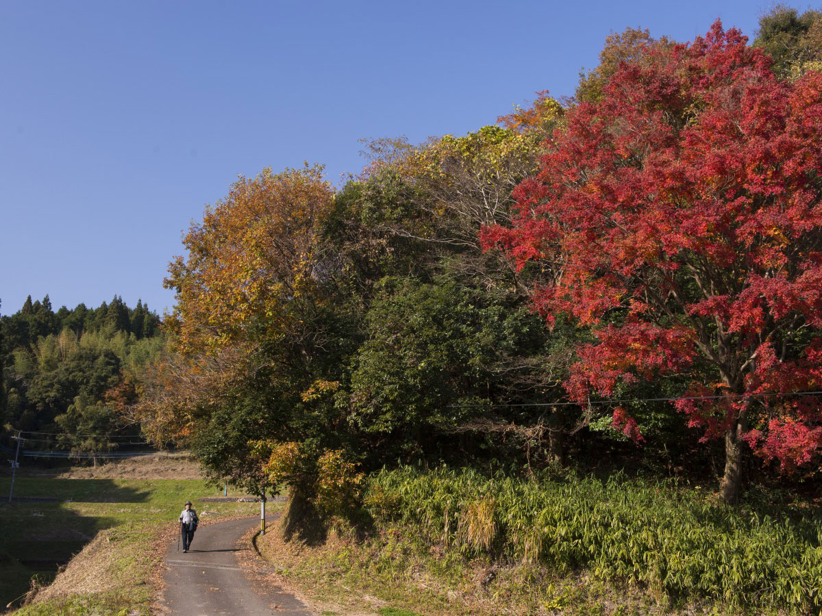 Olle Kyushu (ruta Okubungo)_2