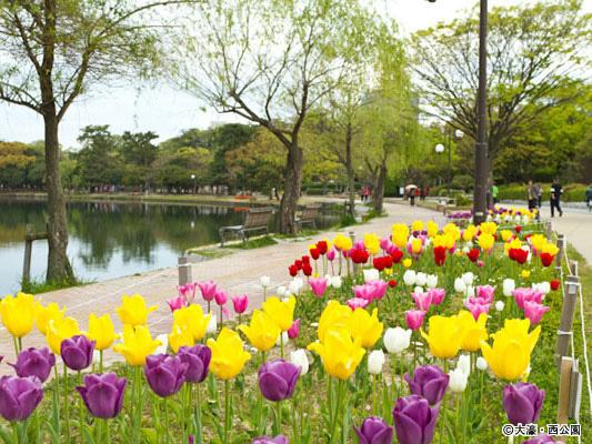 สวนสาธารณะโอโฮริ_2