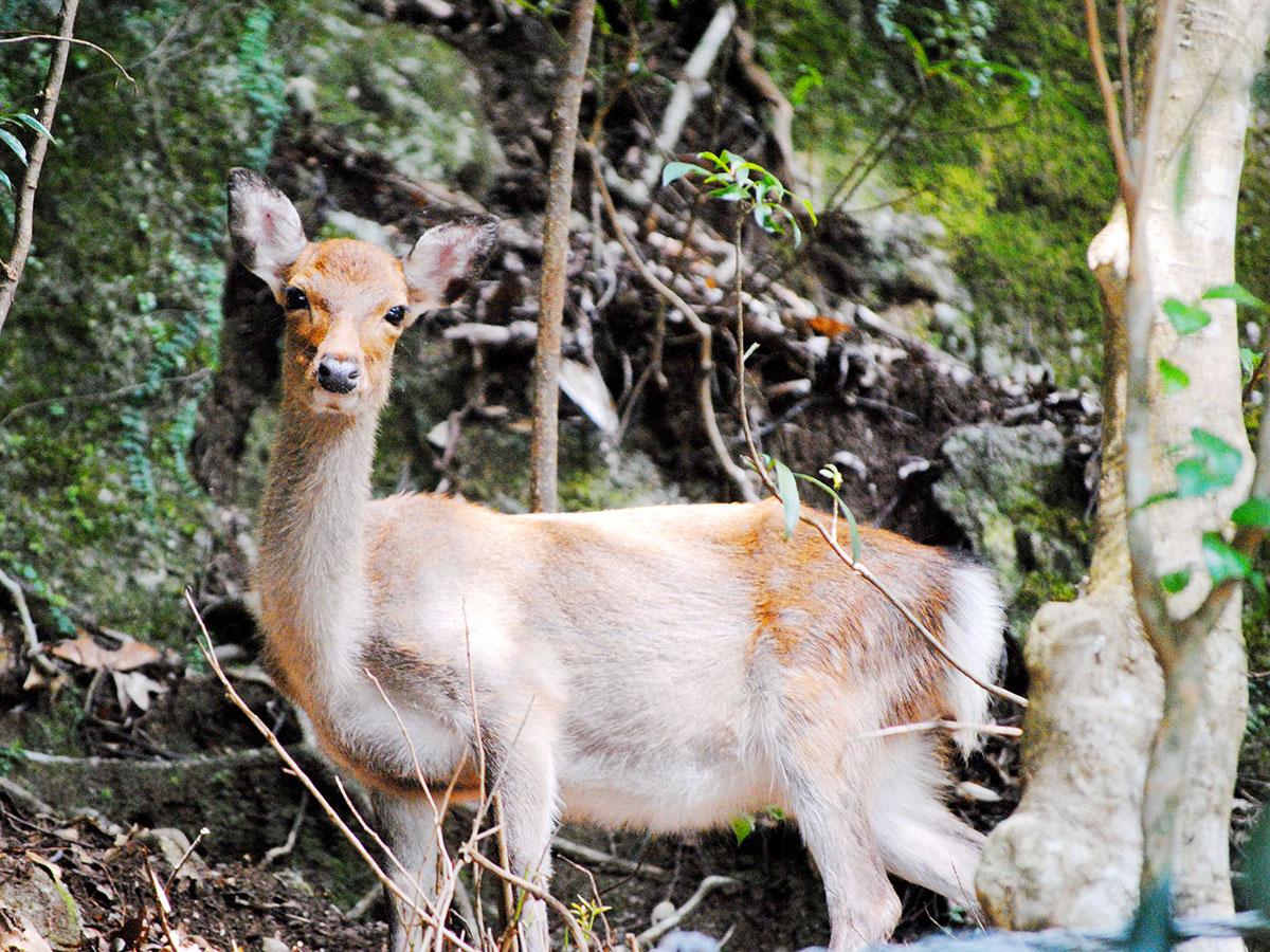 Seibu Rindo Forest Path_2