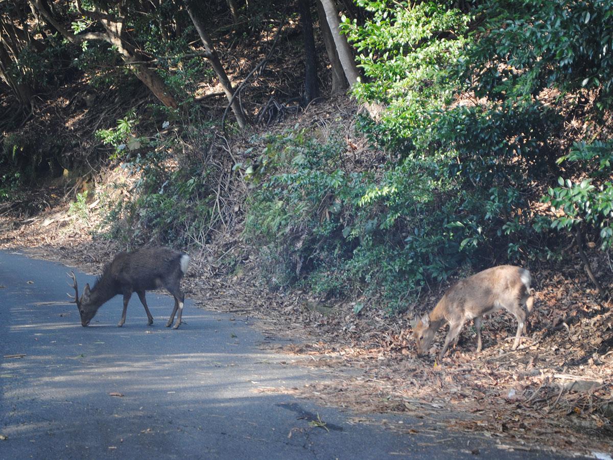 Seibu Rindo Forest Path_3
